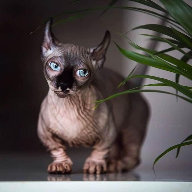 4_Delf_Cat