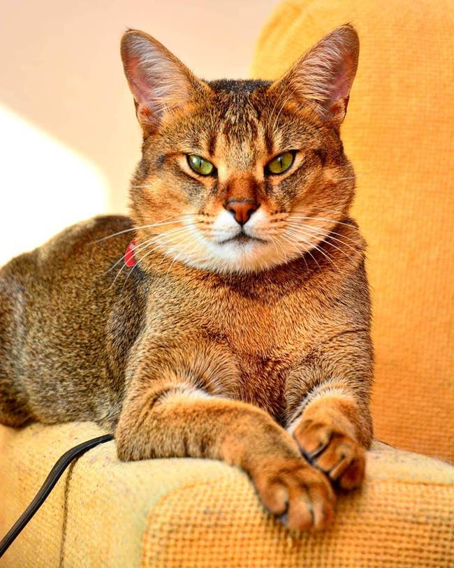 5. Housi (chauzy, chauzy)_Cat