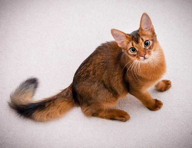 8_Somalia_Cat